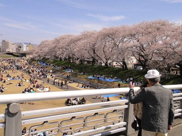 風水の桜(1)